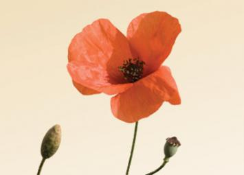 Remembrance Day Poetry article picture